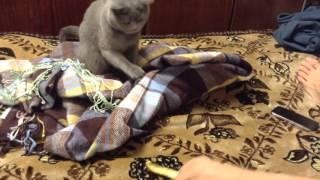 Кошка и апельсин