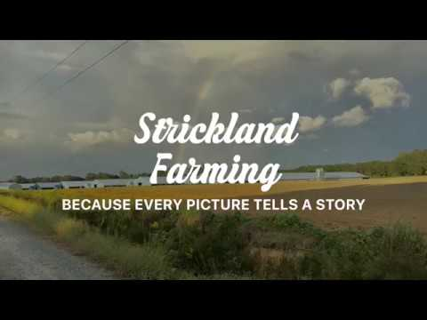 Strickland Farming