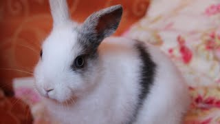 Cutest Animals in The world 🌎 | Supper funniest pets | Animal Planet Ever #23