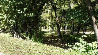 Concierto de Aranjuez - 3. Allegro gentile (Giacomo Bigoni)