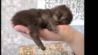 Малыш котенок открывает глазки)