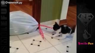 Лучшие кошачьи приколы