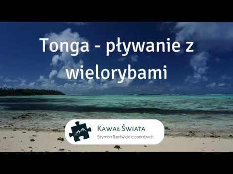 Tonga - pływanie z wielorybami