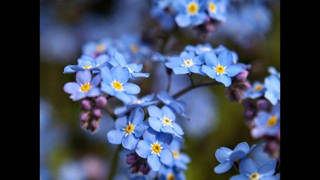 Медитация на голубой цвет