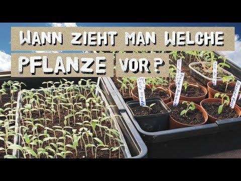 Wann Welche Pflanze Vorziehen? Tipps Zur Jungpflanzenvoranzucht