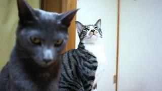 ファンヒーターが入るとうれしい猫たち thumbnail