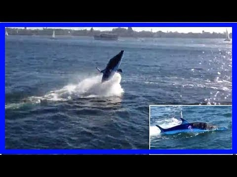 Amazing 'shark' boat captured on camera in San Diego