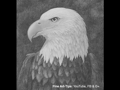 How To Draw A Bald Eagle Head With Pencil - Narrated