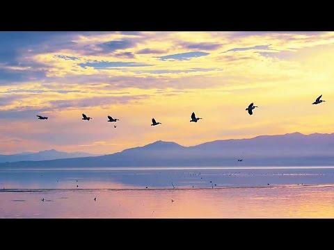 Полёт птиц (♪♫ Infinity-Era) HD