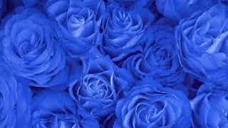 blue rose wallpaper - blue rose live wallpaper screenshot 3