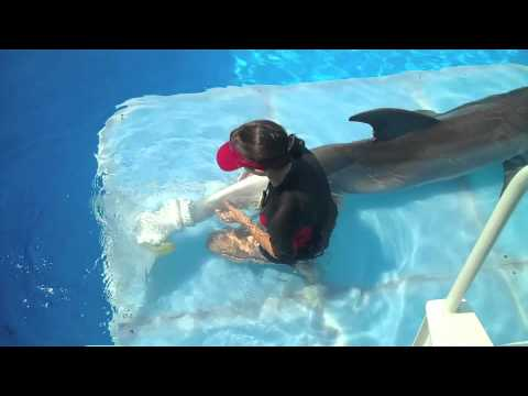 Hazel And Sawyer swimming in clothes with Winter Dolphin ...  |Dolphin Tale 2 Sawyer And Hazel Kiss