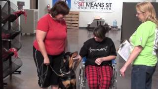 Cgc Therapy Dog Test  Part Lll- Approaching A Wheelchair