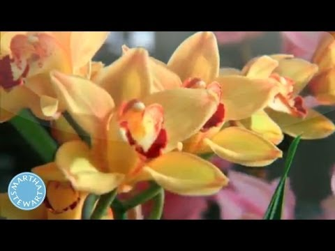 How to Care for Orchids - Martha Stewart - YouTube