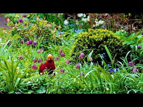 Garden Of Eden - Spring In The Hidden City Garden   Documentary   Landscape Design   Harry Pierik
