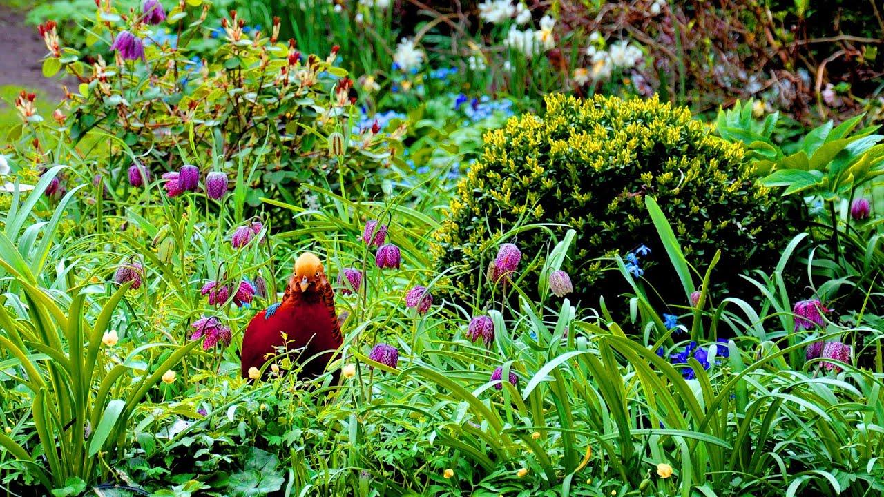 Garden of eden spring in the hidden city garden harry - Where is the garden of eden today ...