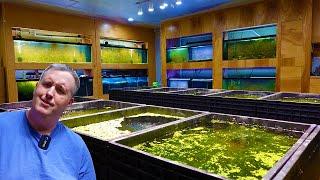 The LAST Aquarium Coop Fish Ro…