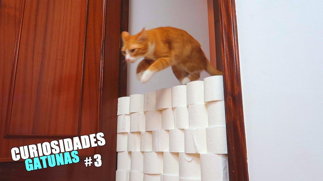 CURIOSIDADES DE LOS GATOS 3