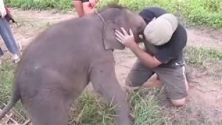 Doğuştan orospu yavru fil ilk defa bir insanla sikişiyor..