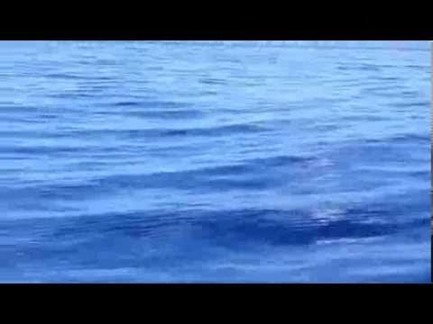 Humpback Whale Song in Maui Waters (2013)