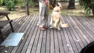 Dog Training - Basic Obedience