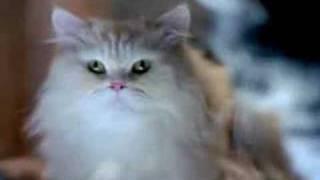 Kuklachev Cats Work / Whiskas Comercial (6)
