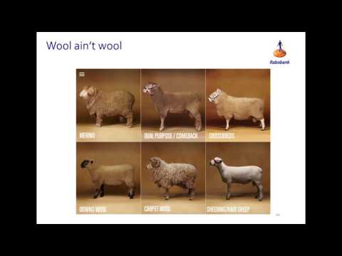 Classing up the opportunities for sheep - Georgia Twomey