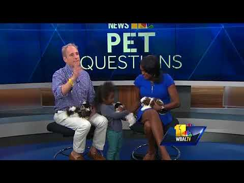 Video: How to treat pets with allergies