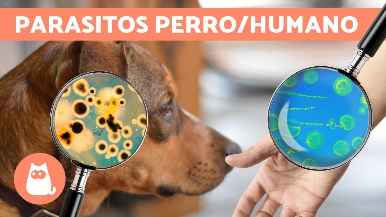 lombrices de perro a personas