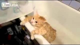 Кот толстяк не может выпрыгнуть из ванны !!!