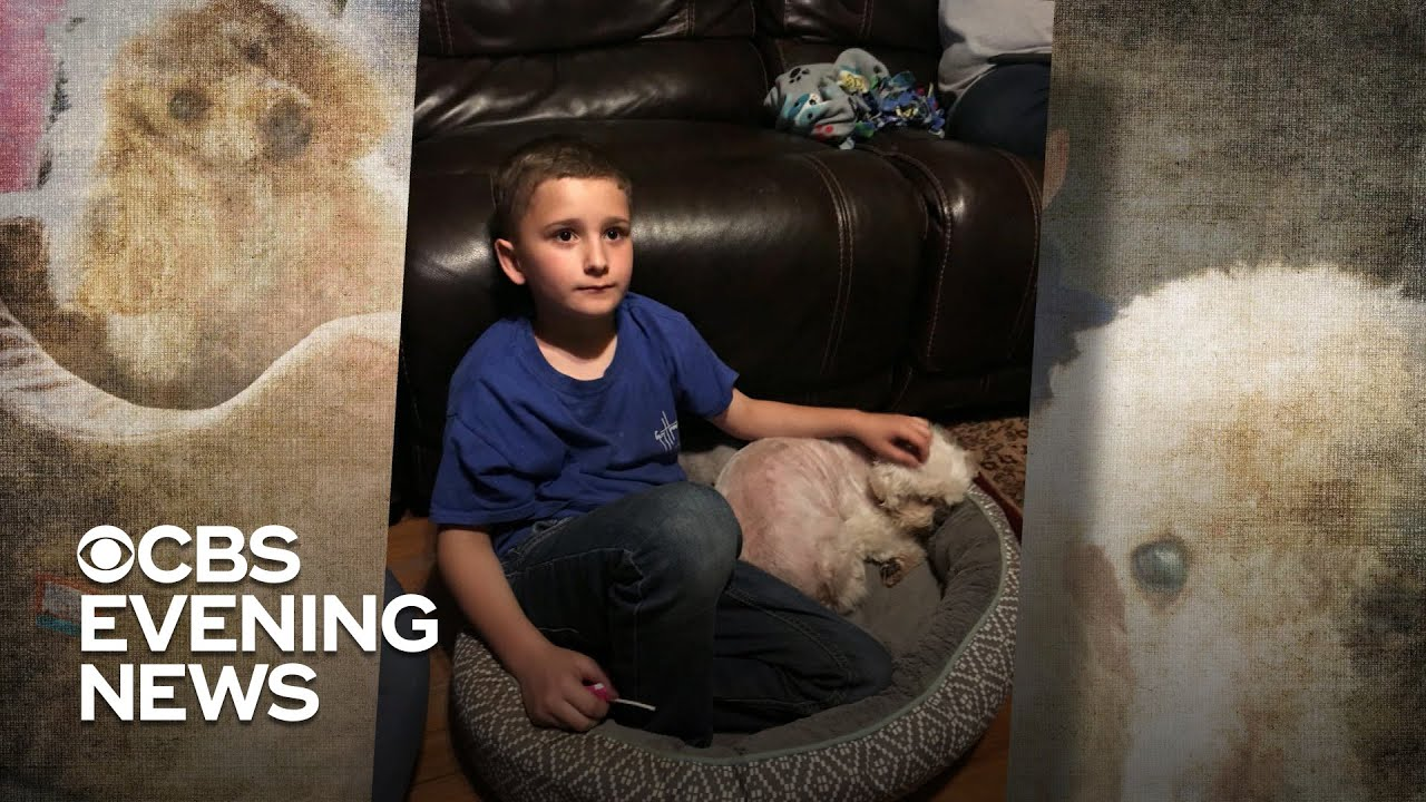 Boy who was adopted determined to give a home to senior dogs