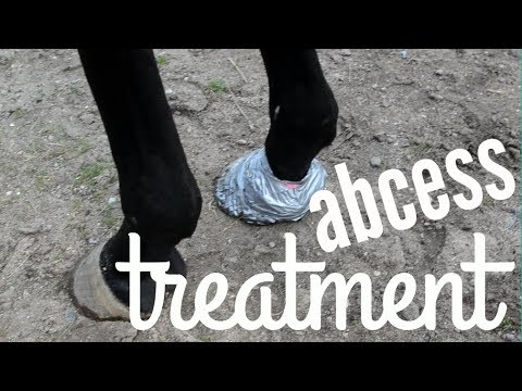 DIY HOOF POULTICE w/ Diapers and Duck Tape! | How to Treat an Abcess