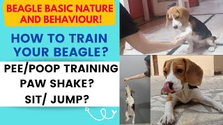 How to train a Beagle Puppy / Dog | Tips and Tricks to train your Dog