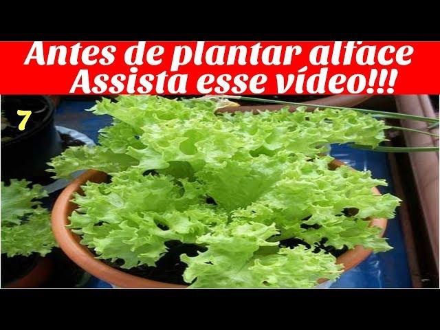 Antes de plantar alface assista esse video (incio meio fim)