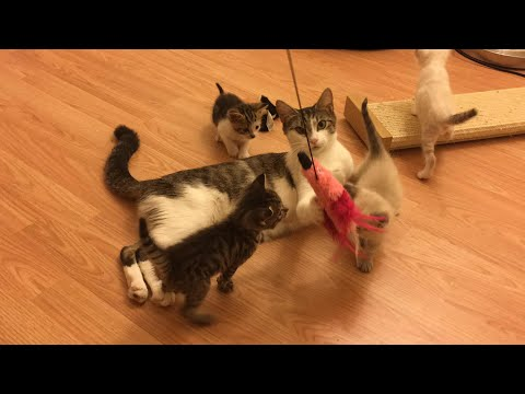 Kittens Explore the Kitten Room! The World is so New to Them!