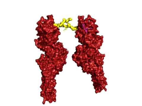 Stat3 Binding Inhibitor