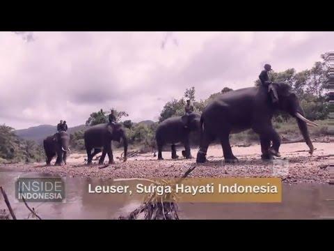 Leuser, Surga Hayati Indonesia