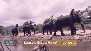 Video Leuser, Surga Hayati Indonesia download MP3, 3GP, MP4, WEBM, AVI, FLV November 2017
