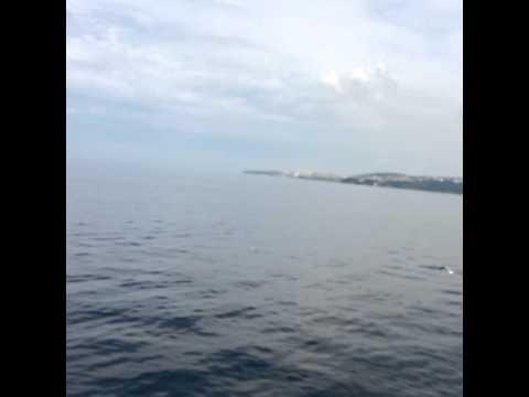 Turkey-Yalova/bursa ferry  Trip
