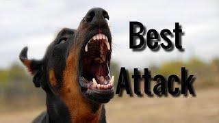 10 psów z najlepszą techniką ataku