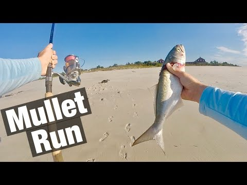 Fishing The MULLET RUN In New Jersey 2019 ( Crazy Blue Fish!! )