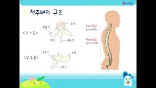 [탑사이언스] 인체의 중심, 척추