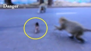 Stop...Stop...! Baby monkey Lola walk across the road | Why mom is careless ?