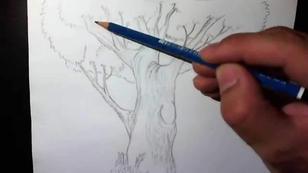 Test Speed Drawing Of A Tree Disegno A Matita Di Un Albero