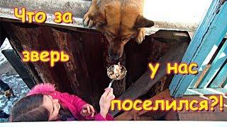 У нас в семье появился новый ОГРОМНЫЙ житель. (04.19г.) Семья Бровченко.