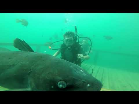 Rob and Hilary - You can go scuba diving in Pelham!