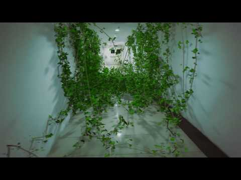 Ivy Growing on Corridor - VFX Scene Done With Cinema 4D and Ivy Generator Plugin