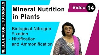 Mineral Nutrition in Plants - Biological Nitrogen Fixation - Nitrification and Ammonification