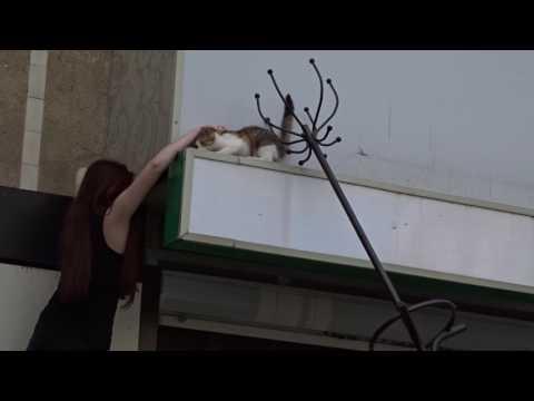 Спасение кошки с козырька кафе в Воронеже