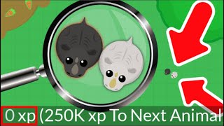 ULTRA RARE 0 XP BLACK RHINO - Mope.io New Rare Black Rhino