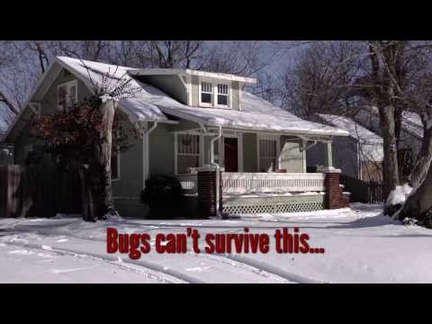 Bugs Can Survive The Cold